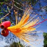 16. Baobab Flower