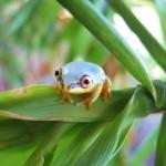 19. Tree Frog