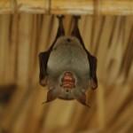6. Bat