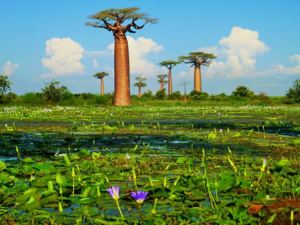 Baobabs Morondava