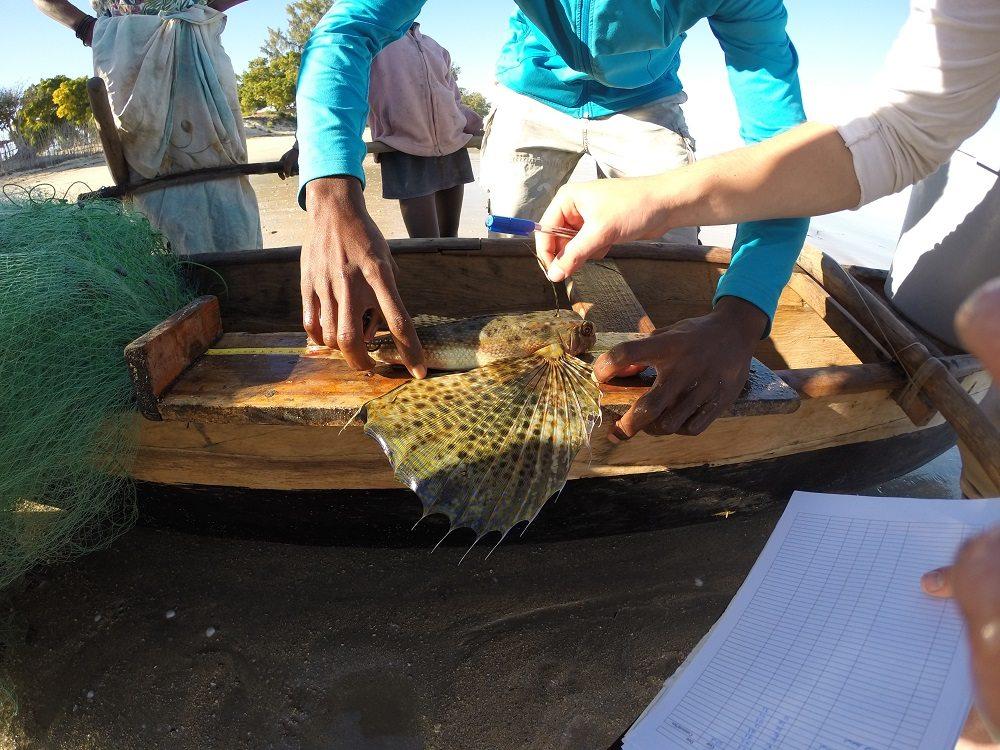 Fisheries measurements