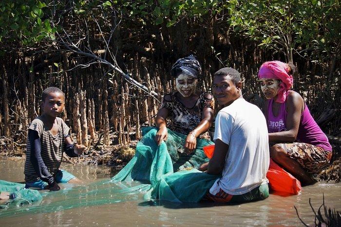 fishing mangroves