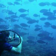 Diver and Unicornfish