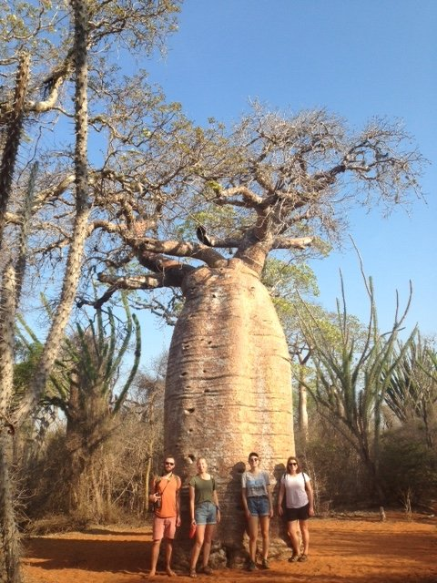 baobab interns