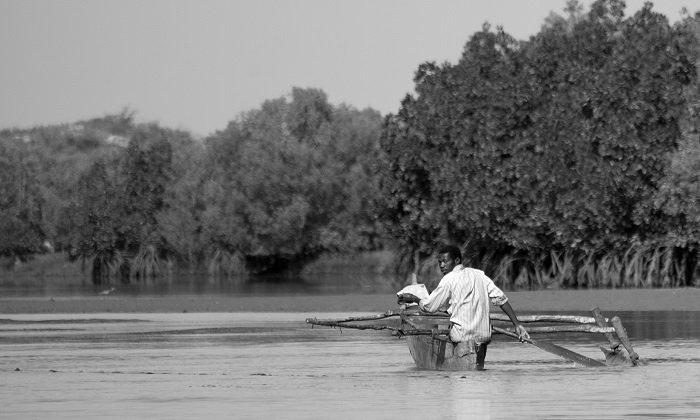 La pirogue dans la mangrove