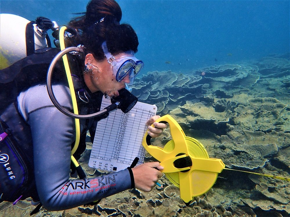 Reef transect