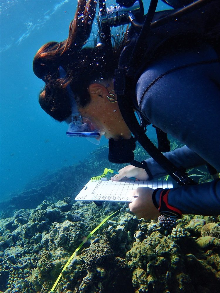 reef surveys
