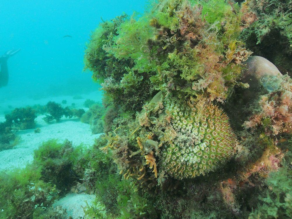 Algae overgrowth