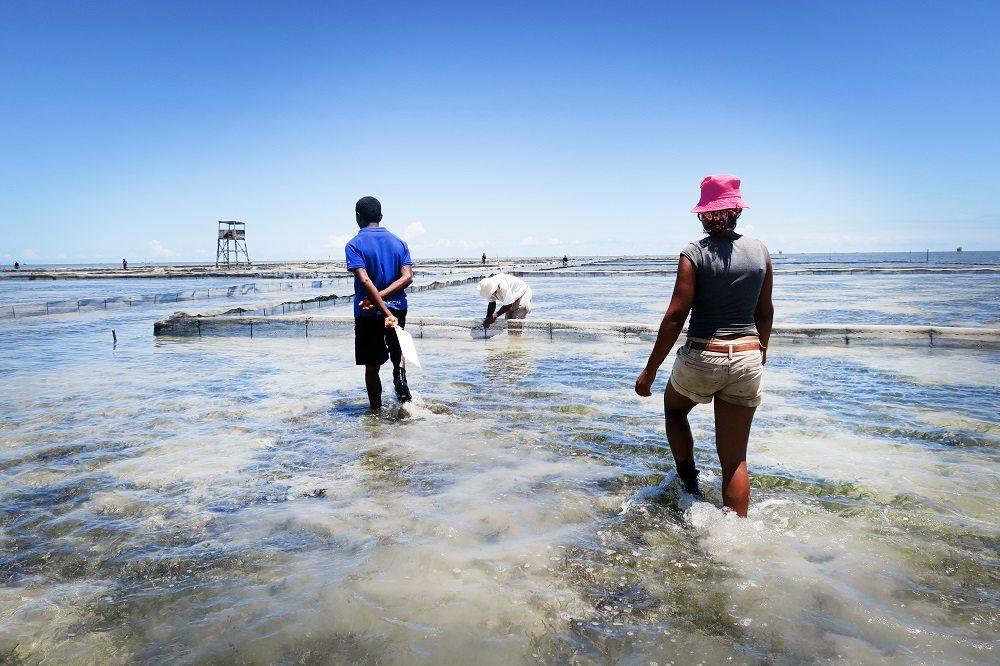 Sea cucumber aquaculture site