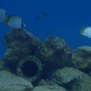 artifical reef