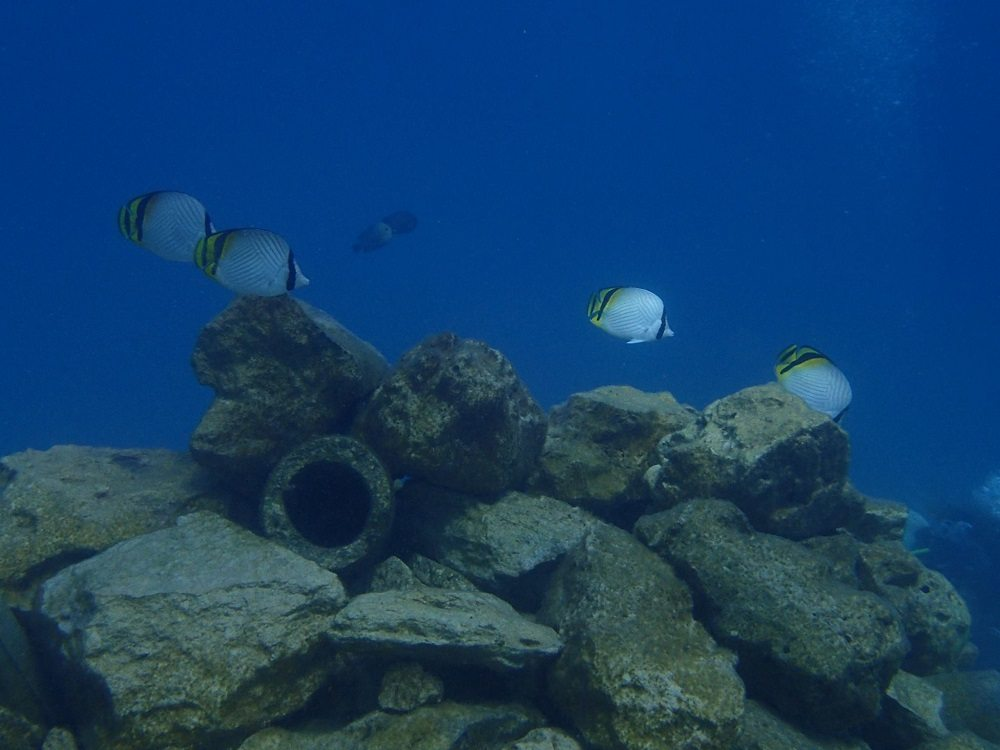 artifical reef with butterflyfish