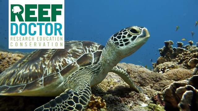 ReefDoctor's work: What we do.