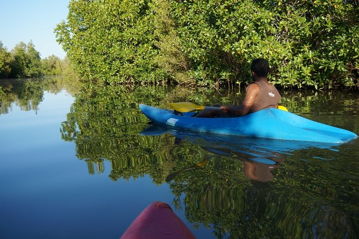 canoe mangrove