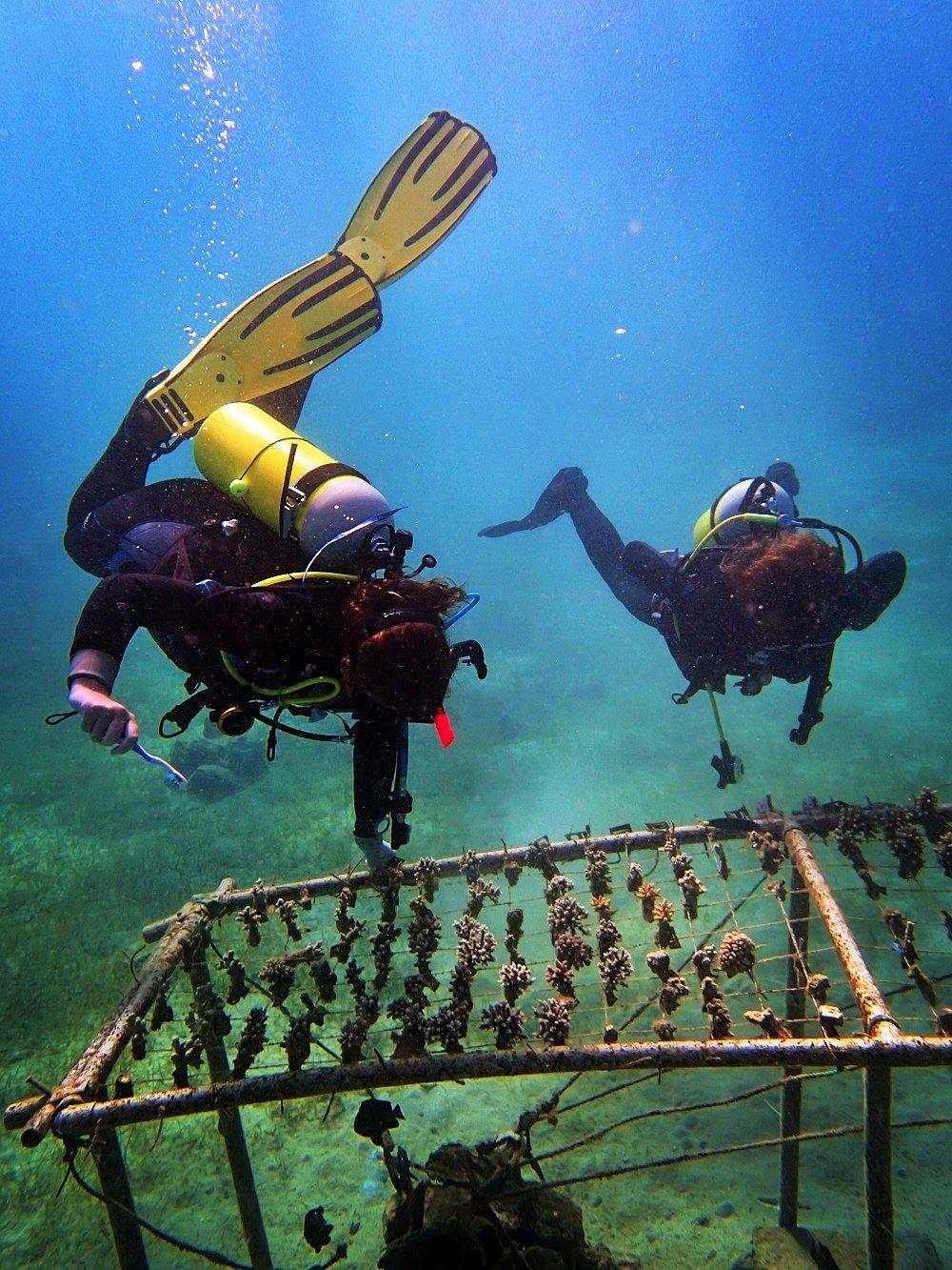 Coral nursey