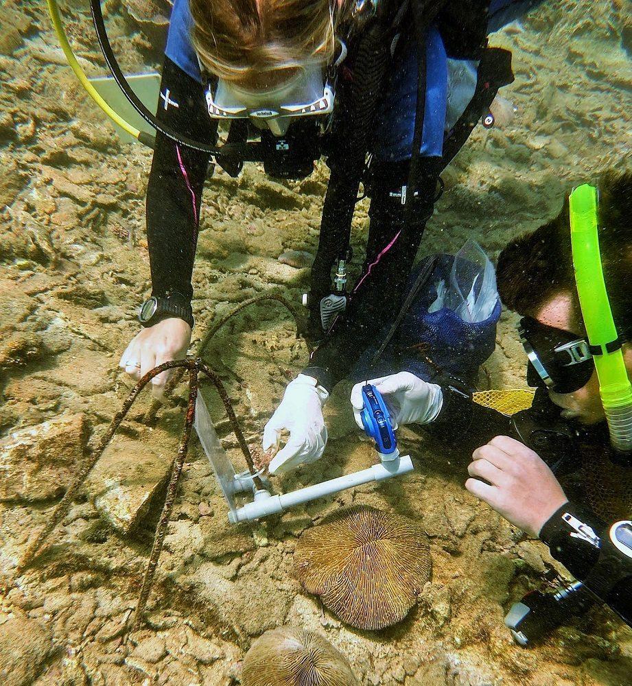 coral transplant measurements
