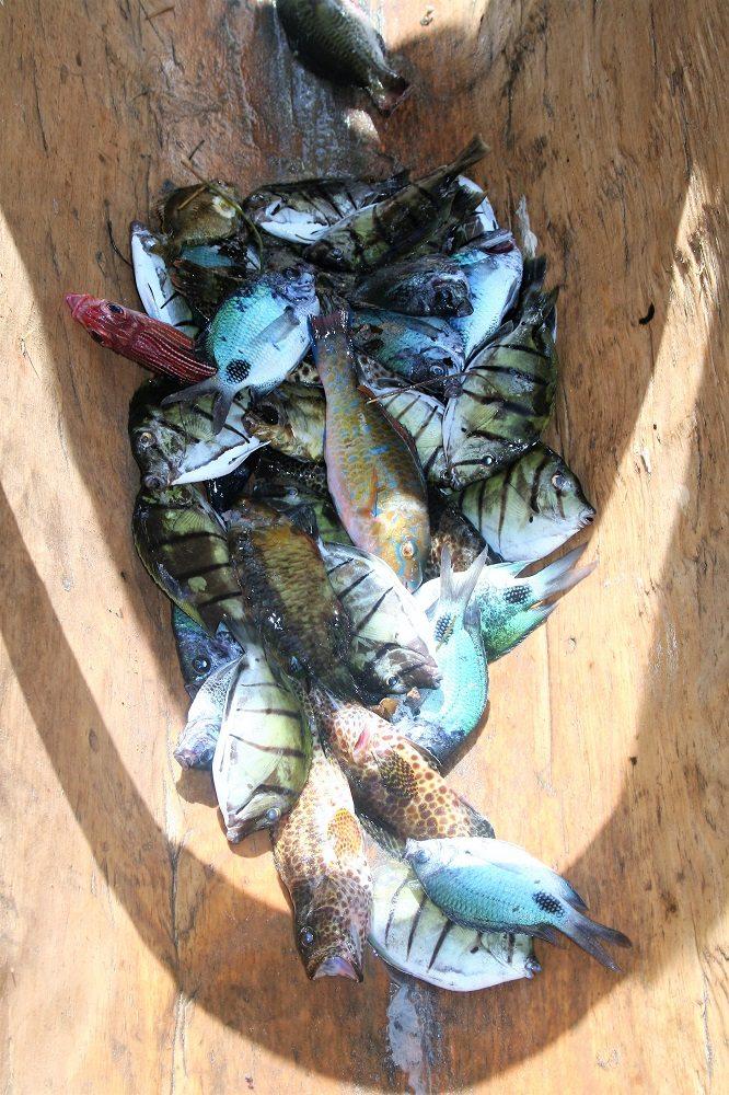 fisheries catch