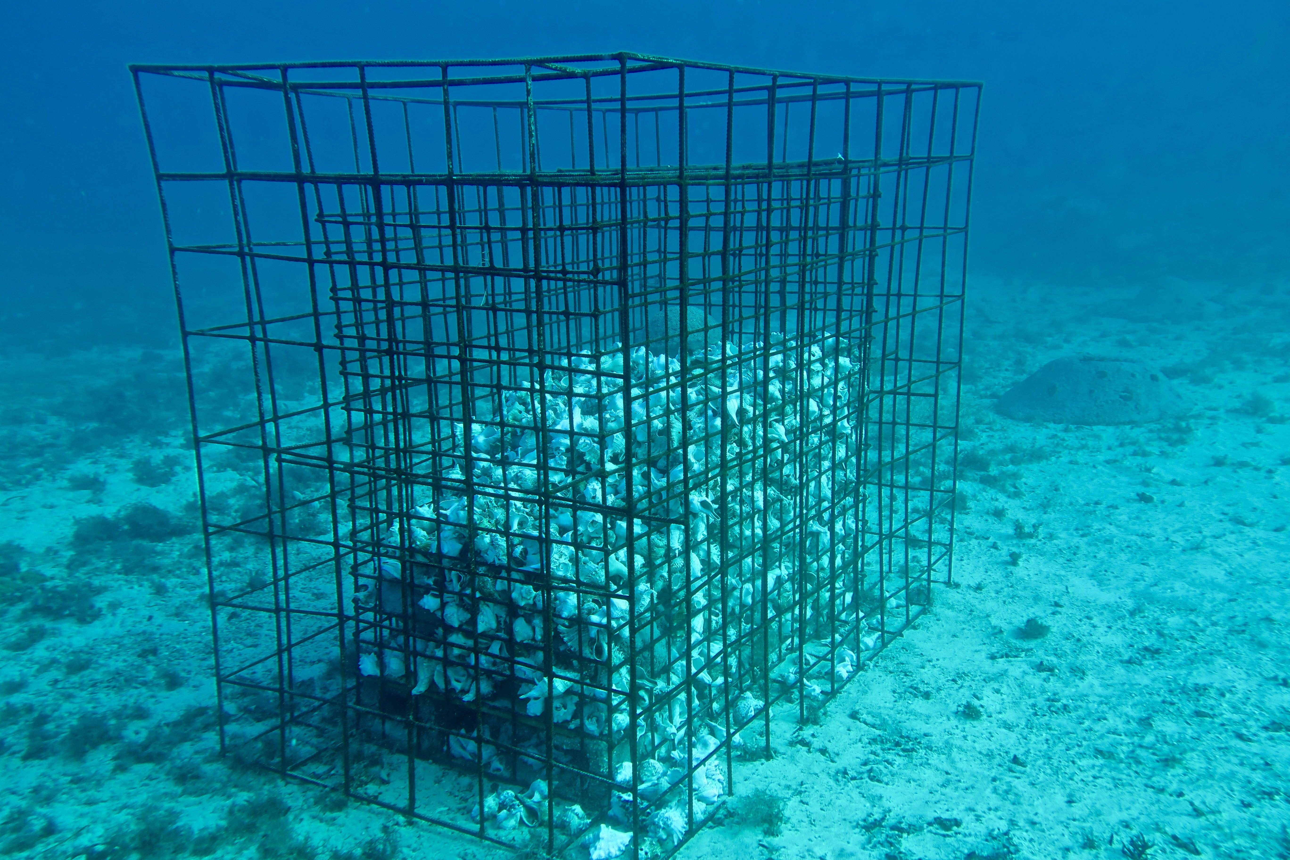 artificial habitat enhancement structure