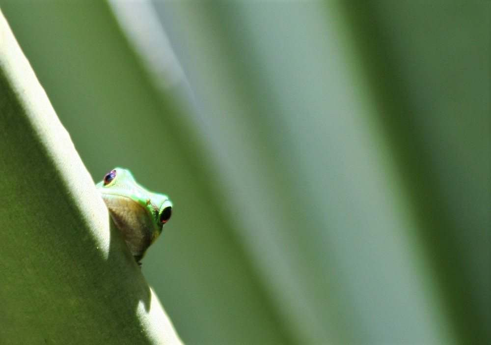 gecko on palm