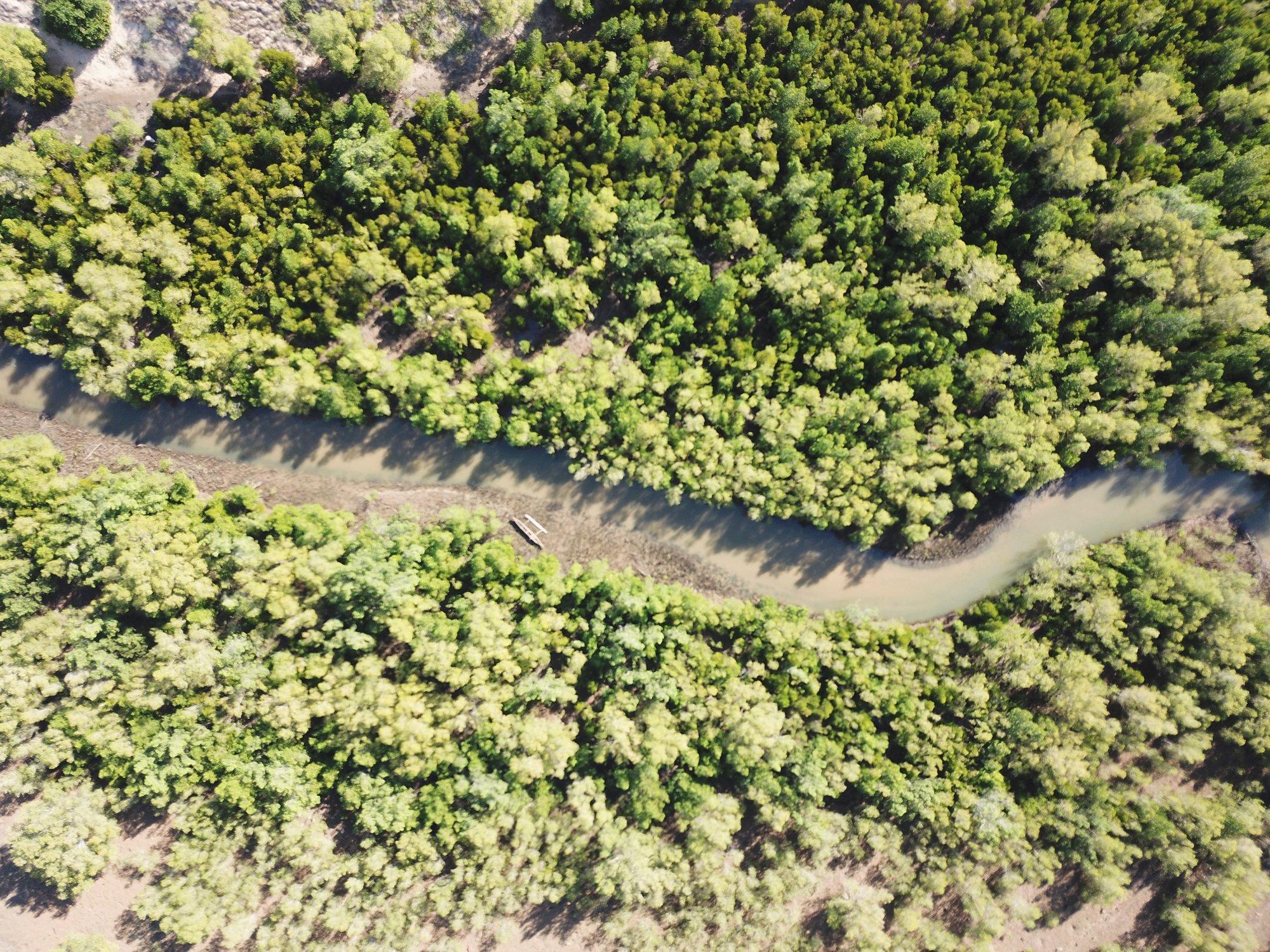 mangrove drone