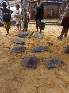 Nine rescued turtles tagged and released by the community turtle protection teams