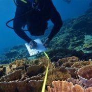Reef surveying