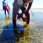 seagrass survey 1
