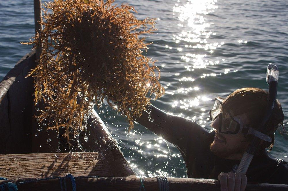 seaweed farm maintenance