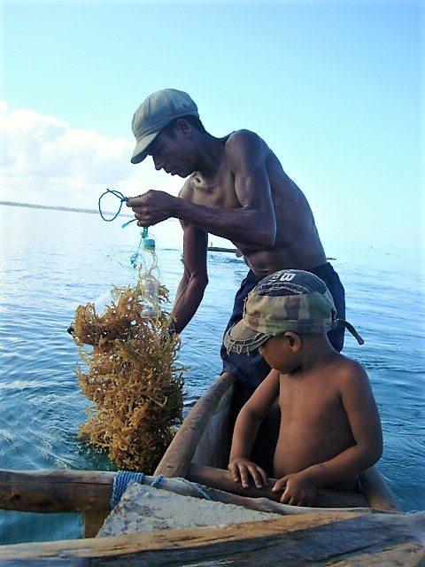 seaweed farmer and son