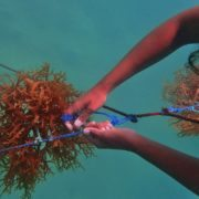 Aquaculture lines