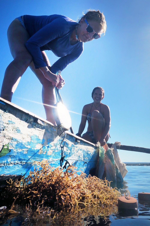 seaweed monitoring