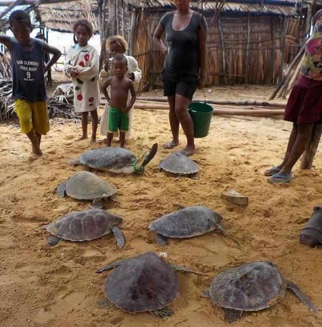 turtle fishery