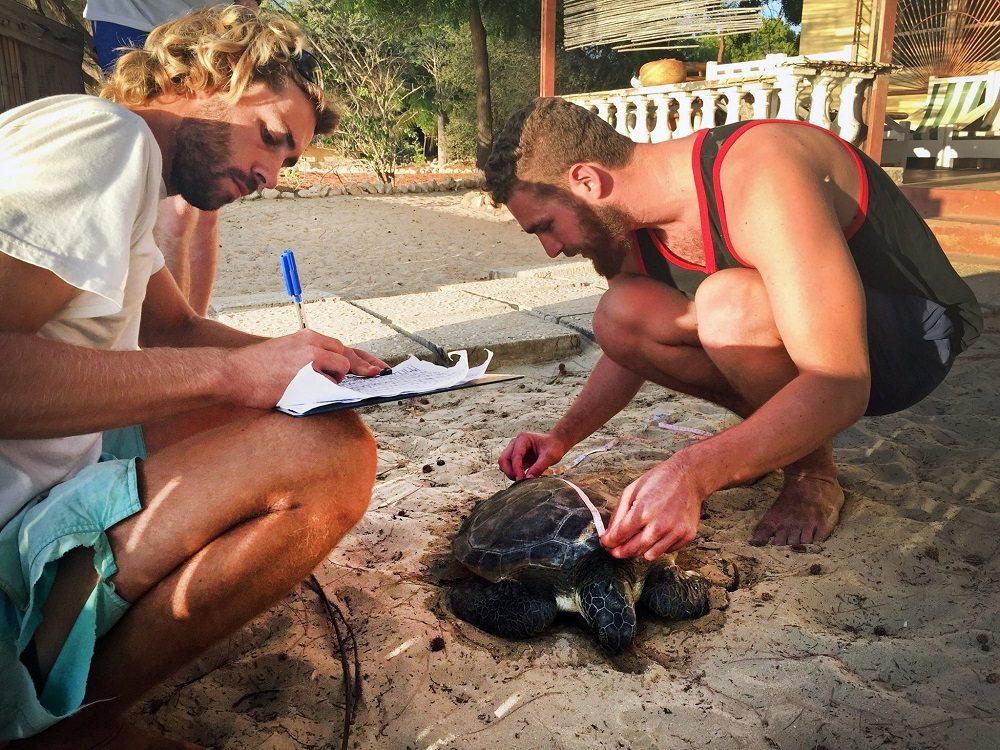 turtle measurements