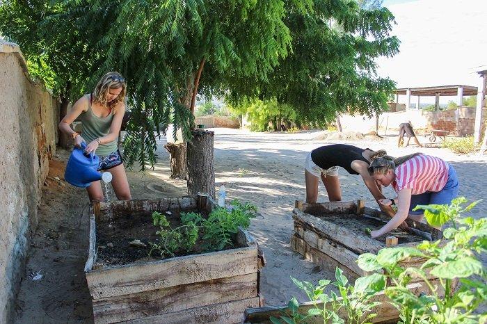 veg garden maintenance