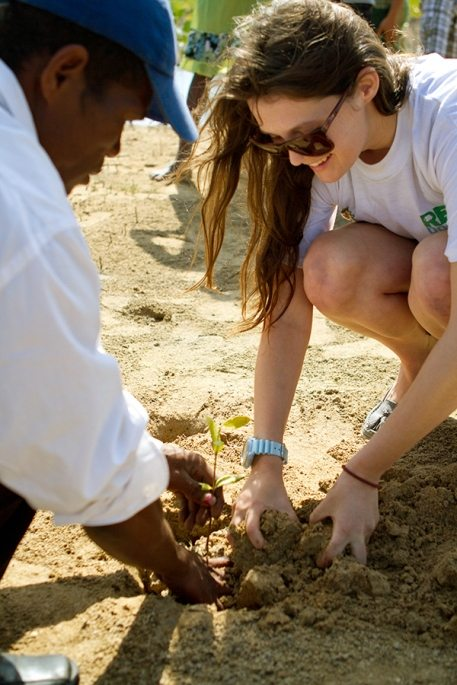 vol planting mangrove sapling