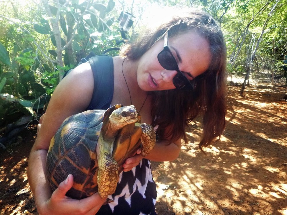vol with tortoise