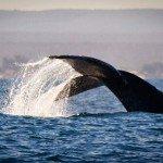 whales bay ranobe