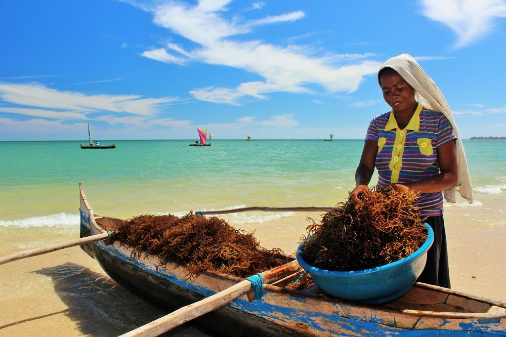 local women collecting seaweed
