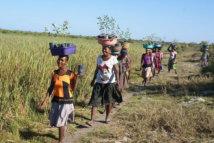 women planting mangroves