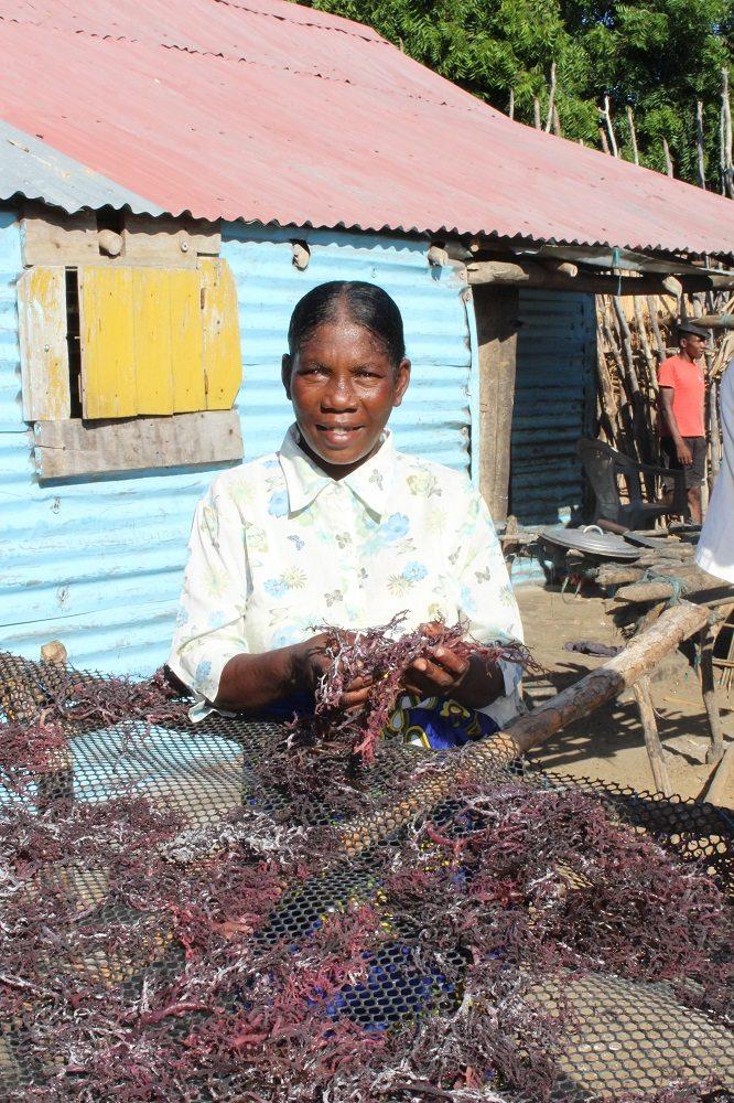 women seaweed drying