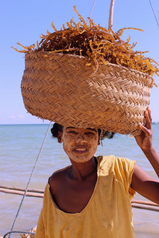 women seaweed harvesting